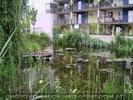 Autofreihe Siedlung - Teich