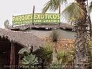 Exotische Pflanzen 01