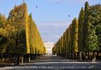 Allee zum Schloss Schönbrunn