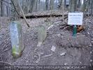Den Wald schützen 36