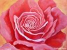 Rose (Wolfgang Rehor)