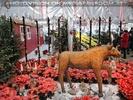 Weihnachtsträume 27