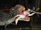 T.Rex - Mahlzeit