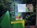 Schützt den Sumatra Tiger 1