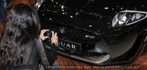Beauties and Beasts 19 - Jaguar