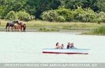Bootfahren nahe der Pferde