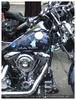Harley wolf