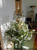 Evas Weihnachtsbaum