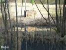 Spiegelung am Teich