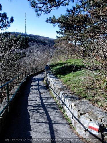 Blick zum Kahlenberg 2