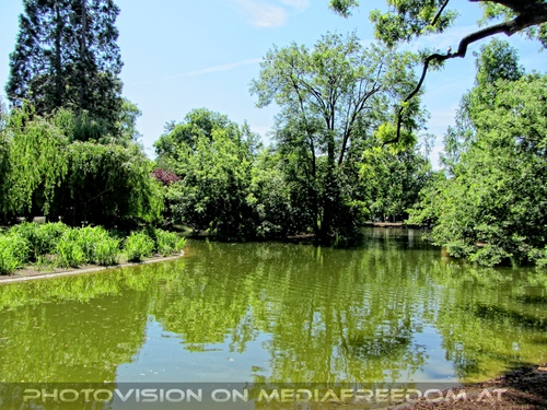 Teich im Stadtpark