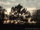 Baum in der Dämmerung