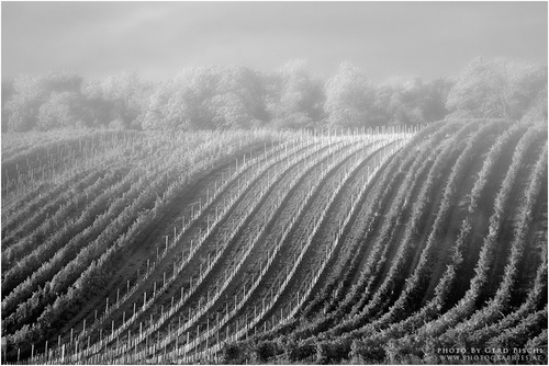 Nebel in den Weinbergen bei Wien