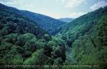 Das Waldtal
