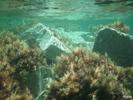 Unterwasserwunderwelt