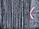 Den Wald schützen 25