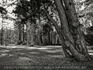 Der Wald 05