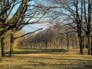 Der Wald 06