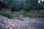 Fluss in der Au