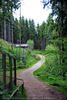 Im Wald 7