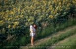 Am Sonneblumenfeld