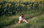 Am Sonneblumenfelde