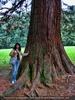 lehnen am alten weisen Baum