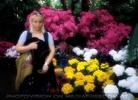 Blumen und Palmen 1