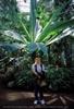 Blumen und Palmen 5