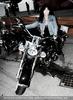 Harley Braut