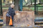 Gepard 10