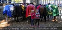 Ritterturnier zu Pferde 20