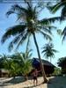 Palmenstütze