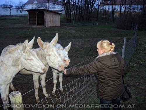 Weiße Esel 13: Gabriele P.