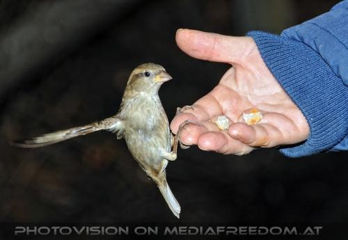 Vögel füttern 05: Gabriele P.