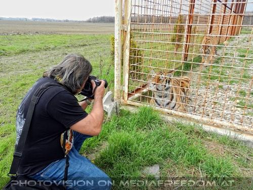 Mit den Tigern 23: Charly Swoboda