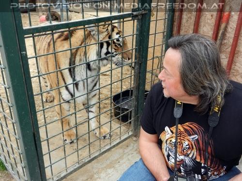 Mit den Tigern 40: Charly Swoboda