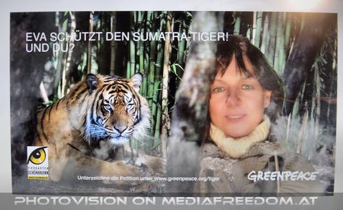 Sumatra Tiger - Greenpeace 2: Eva D.