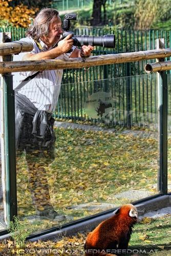 Rote Pandas 05: Charly Swoboda