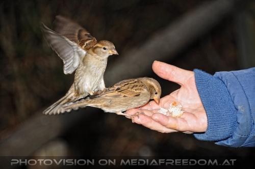 Vögel füttern 07: Gabriele P.