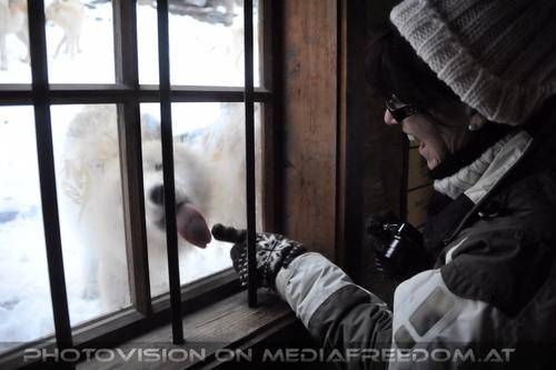 Polar Wölfe 10: Eva D.