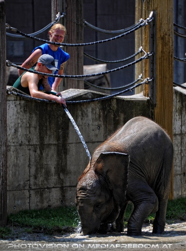 Die Elefanten Dusche 02