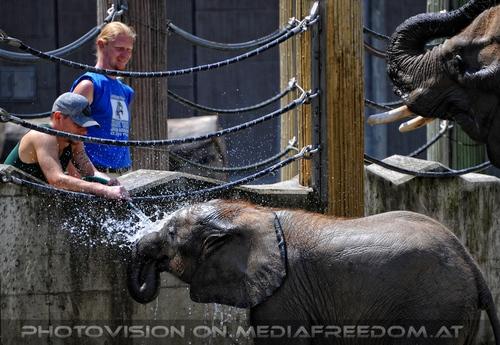 Die Elefanten Dusche 04