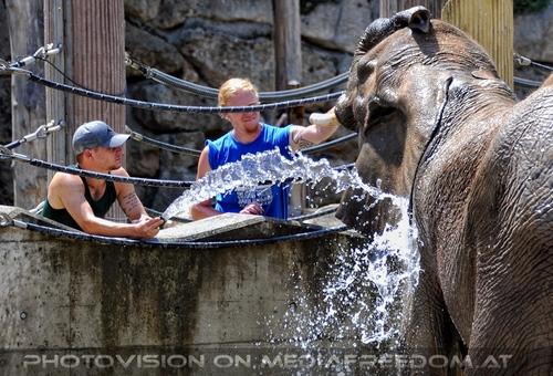 Die Elefanten Dusche 14
