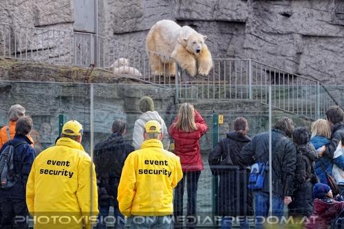 Eisbären Familie 32