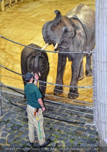 Elefanten Pflege 10