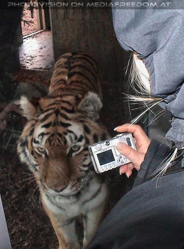 Tigerpix: Gabriele P.