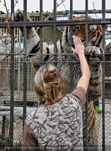 Mit den Tigern 39
