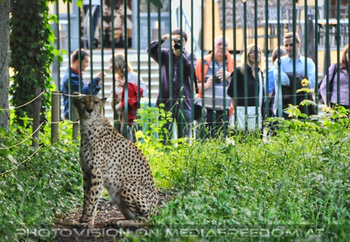 Gepard Präsentation