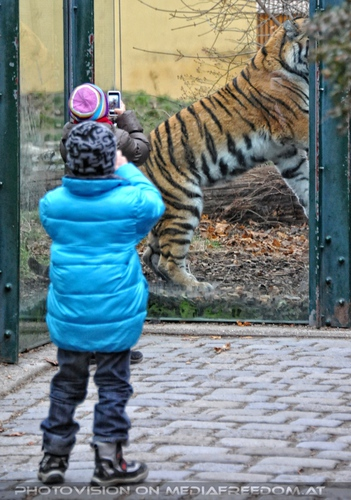 Fotomodell: Sibirischer Tiger